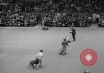 Image of Westminster Kennel Club dog show New York United States USA, 1965, second 53 stock footage video 65675070999