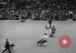Image of Westminster Kennel Club dog show New York United States USA, 1965, second 54 stock footage video 65675070999