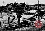 Image of Natural resources of South Vietnam South East Asia, 1960, second 23 stock footage video 65675071034