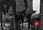 Image of Negro farmers United States USA, 1931, second 25 stock footage video 65675071224