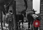 Image of Negro farmers United States USA, 1931, second 31 stock footage video 65675071224