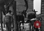 Image of Negro farmers United States USA, 1931, second 32 stock footage video 65675071224