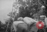 Image of Japanese troops Singapore, 1942, second 22 stock footage video 65675071243