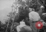 Image of Japanese troops Singapore, 1942, second 23 stock footage video 65675071243