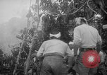 Image of Japanese troops Singapore, 1942, second 24 stock footage video 65675071243