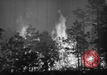 Image of forest fire New Jersey United States USA, 1944, second 31 stock footage video 65675071254