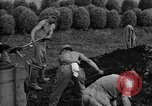 Image of Japanese prisoners of war Mukden Manchuria, 1945, second 33 stock footage video 65675071283