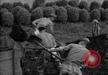 Image of Japanese prisoners of war Mukden Manchuria, 1945, second 34 stock footage video 65675071283