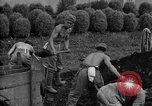 Image of Japanese prisoners of war Mukden Manchuria, 1945, second 36 stock footage video 65675071283