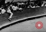 Image of bull fighting Spain, 1943, second 3 stock footage video 65675071387