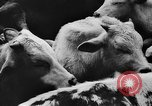 Image of collective farms Ukraine, 1943, second 18 stock footage video 65675071391