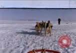 Image of dog team Antarctica, 1964, second 1 stock footage video 65675071420