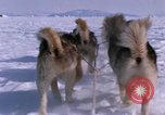 Image of dog team Antarctica, 1964, second 35 stock footage video 65675071420