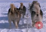 Image of dog team Antarctica, 1964, second 36 stock footage video 65675071420