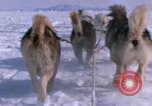 Image of dog team Antarctica, 1964, second 37 stock footage video 65675071420