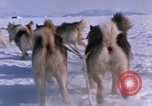 Image of dog team Antarctica, 1964, second 39 stock footage video 65675071420