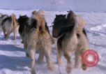 Image of dog team Antarctica, 1964, second 40 stock footage video 65675071420