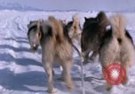 Image of dog team Antarctica, 1964, second 41 stock footage video 65675071420