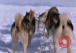 Image of dog team Antarctica, 1964, second 43 stock footage video 65675071420