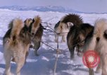 Image of dog team Antarctica, 1964, second 44 stock footage video 65675071420
