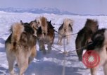 Image of dog team Antarctica, 1964, second 45 stock footage video 65675071420