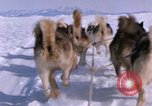 Image of dog team Antarctica, 1964, second 46 stock footage video 65675071420