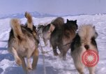 Image of dog team Antarctica, 1964, second 47 stock footage video 65675071420