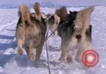 Image of dog team Antarctica, 1964, second 48 stock footage video 65675071420