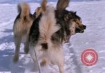 Image of dog team Antarctica, 1964, second 49 stock footage video 65675071420