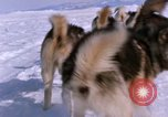 Image of dog team Antarctica, 1964, second 50 stock footage video 65675071420