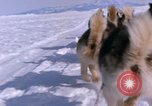 Image of dog team Antarctica, 1964, second 52 stock footage video 65675071420
