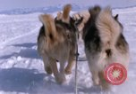 Image of dog team Antarctica, 1964, second 53 stock footage video 65675071420