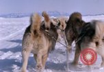 Image of dog team Antarctica, 1964, second 54 stock footage video 65675071420