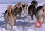 Image of dog team Antarctica, 1964, second 55 stock footage video 65675071420