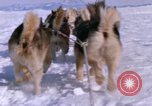 Image of dog team Antarctica, 1964, second 56 stock footage video 65675071420