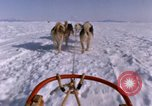 Image of dog team Antarctica, 1964, second 59 stock footage video 65675071420