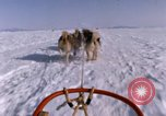Image of dog team Antarctica, 1964, second 60 stock footage video 65675071420