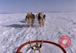 Image of dog team Antarctica, 1964, second 61 stock footage video 65675071420