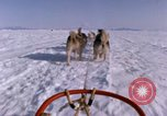 Image of dog team Antarctica, 1964, second 62 stock footage video 65675071420