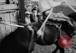 Image of rodeo Pendleton Oregon USA, 1955, second 18 stock footage video 65675071442