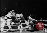 Image of Boxing cats West Orange New Jersey USA, 1894, second 4 stock footage video 65675071490
