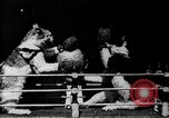 Image of Boxing cats West Orange New Jersey USA, 1894, second 6 stock footage video 65675071490