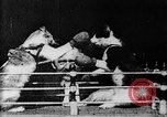 Image of Boxing cats West Orange New Jersey USA, 1894, second 7 stock footage video 65675071490