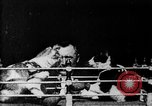 Image of Boxing cats West Orange New Jersey USA, 1894, second 8 stock footage video 65675071490