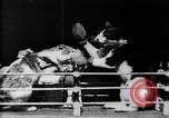 Image of Boxing cats West Orange New Jersey USA, 1894, second 14 stock footage video 65675071490