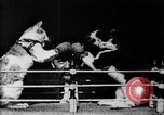 Image of Boxing cats West Orange New Jersey USA, 1894, second 15 stock footage video 65675071490