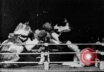 Image of Boxing cats West Orange New Jersey USA, 1894, second 16 stock footage video 65675071490
