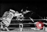 Image of Boxing cats West Orange New Jersey USA, 1894, second 18 stock footage video 65675071490