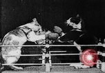 Image of Boxing cats West Orange New Jersey USA, 1894, second 20 stock footage video 65675071490
