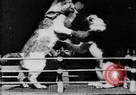 Image of Boxing cats West Orange New Jersey USA, 1894, second 21 stock footage video 65675071490